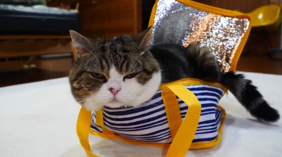 Maru And His Cool Bag