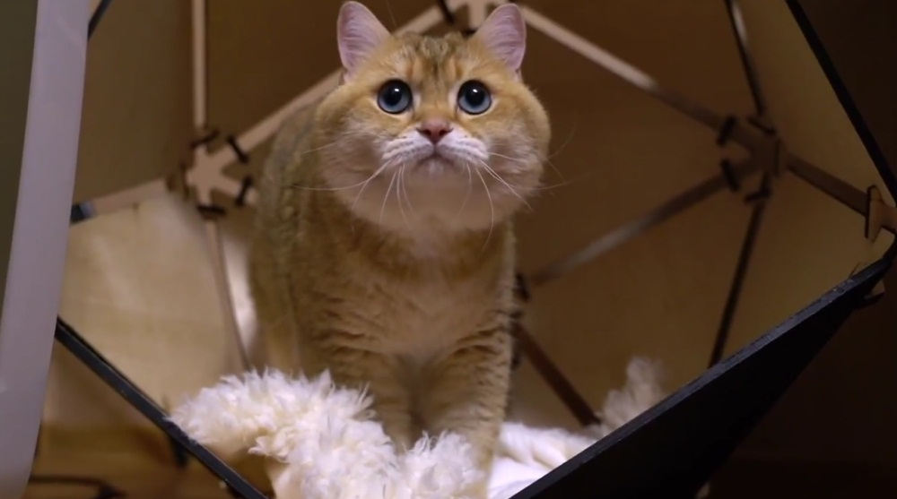 Some Facts About Hosico