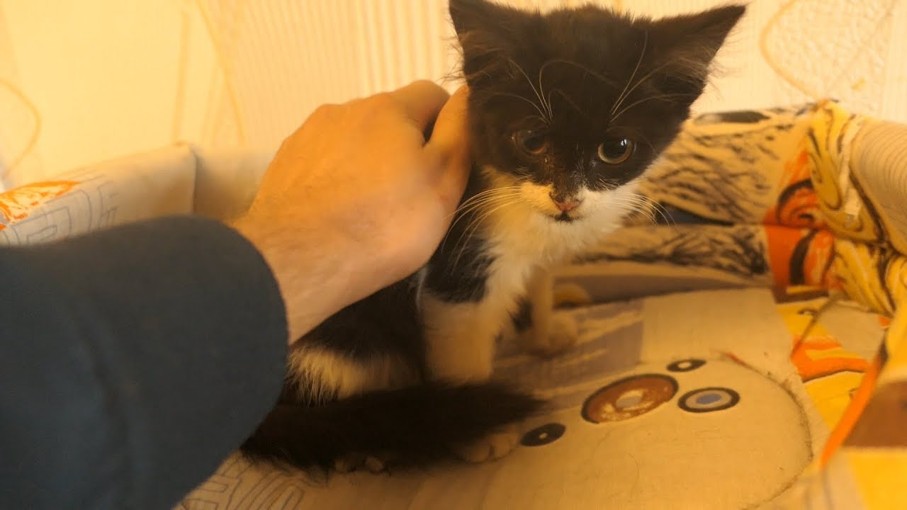 Taking a kitten from the streets home