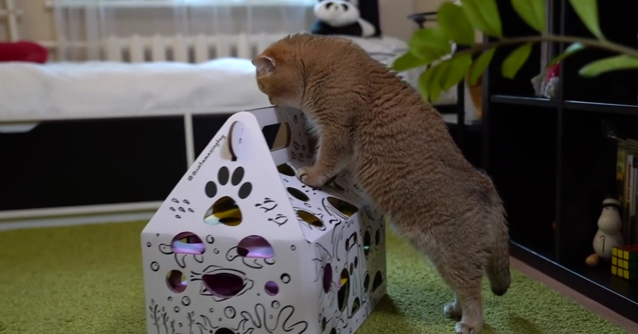 Hosico And His New Toy
