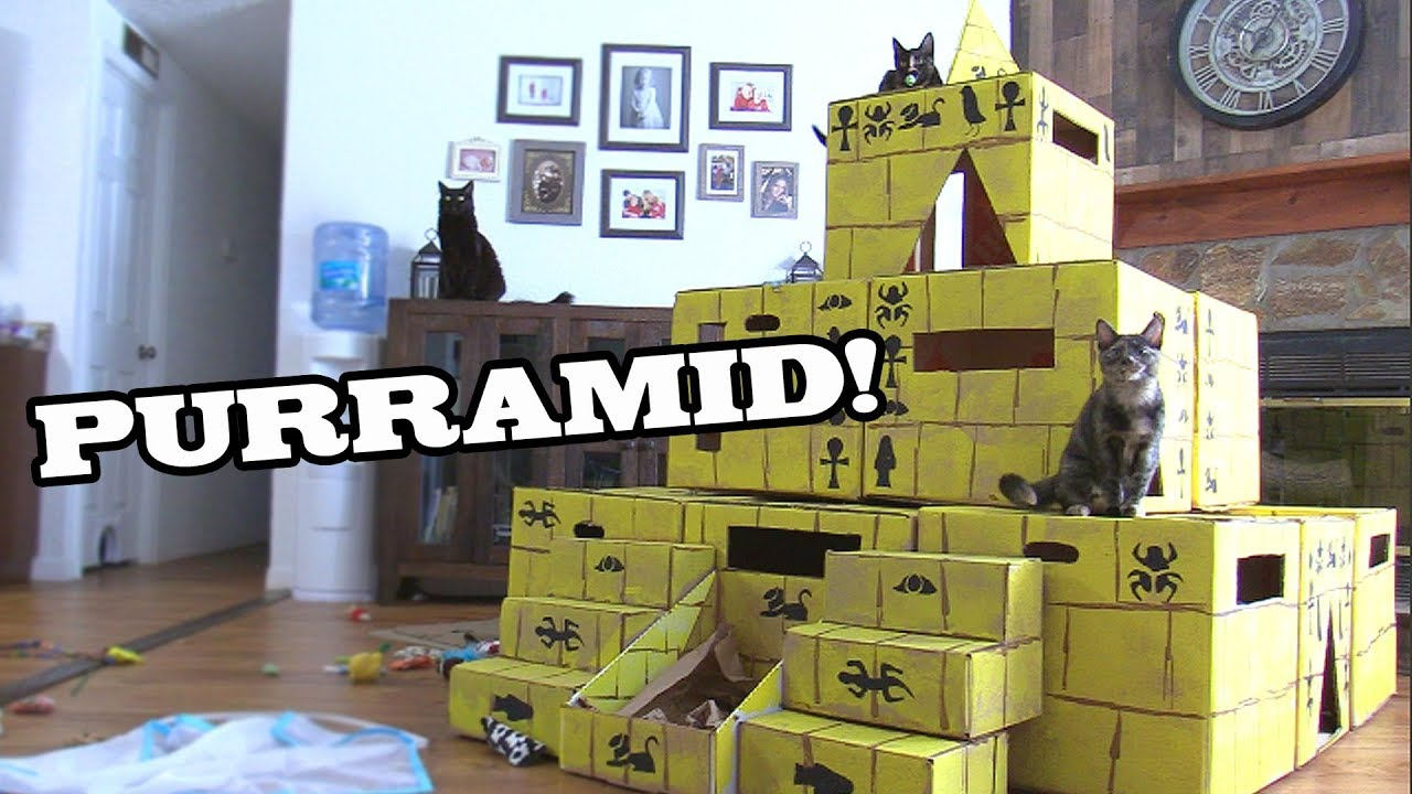 A cardboard pyramid for cats