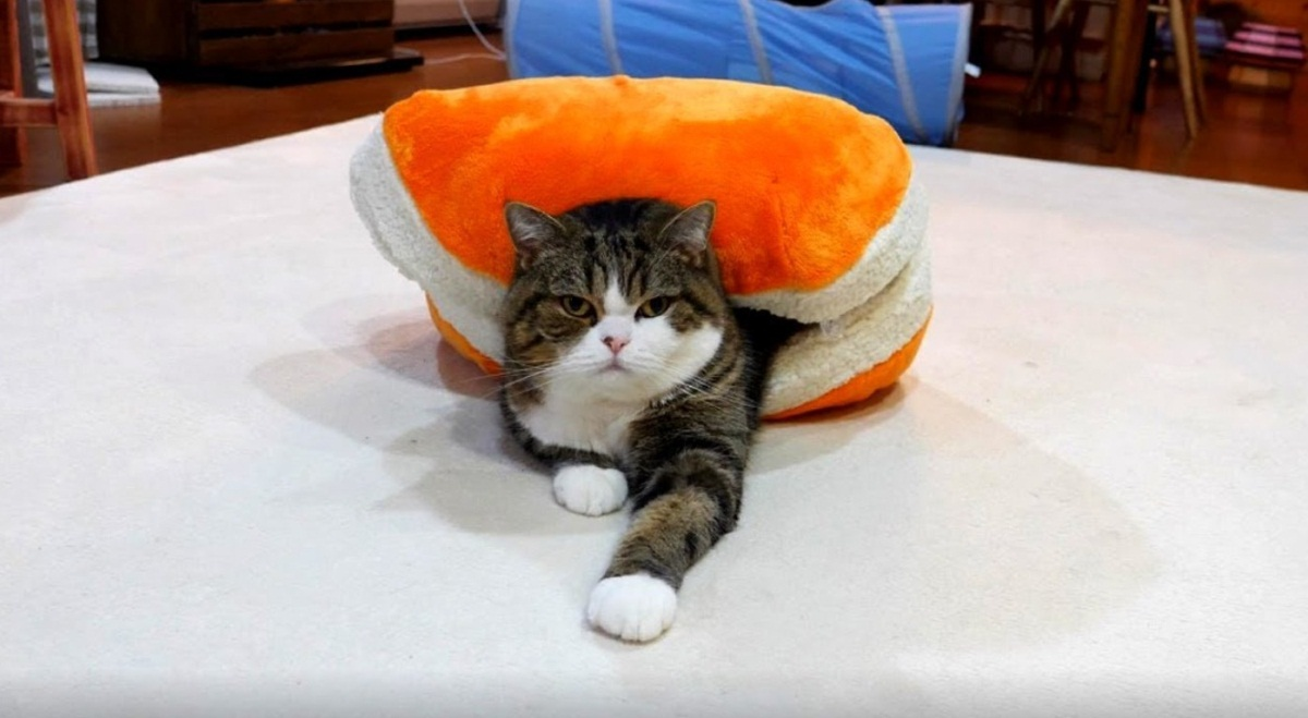 Maru Relaxing In His Weird Bed
