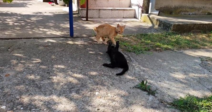 Kittens Wrestling In The Garden