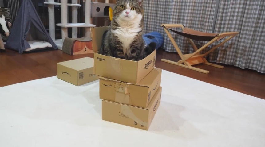 Maru Plays With Stacked Boxes