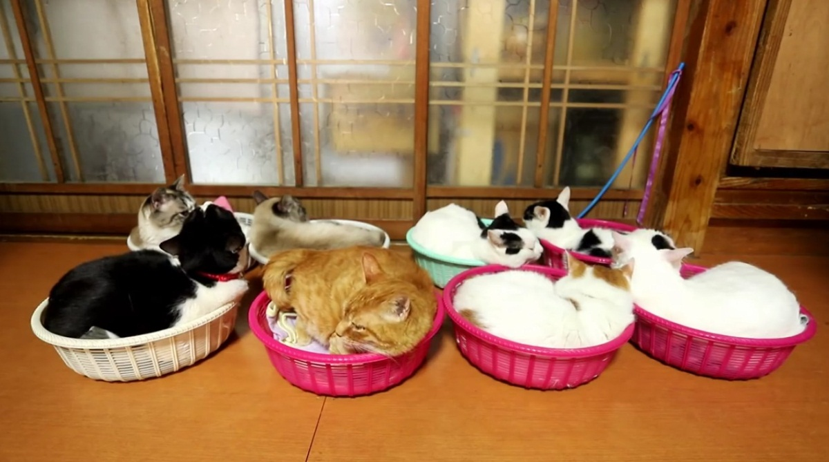 Shiro And The Gang Relaxing