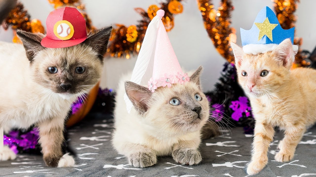 How to make Halloween hats for kittens