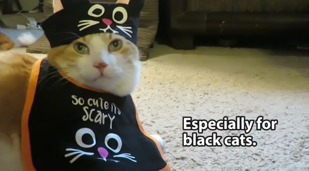 Keep Your Cats Safe For Halloween