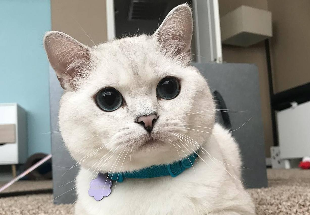Meet COFFEE - The cat with eyes like galaxies and a pink little nose
