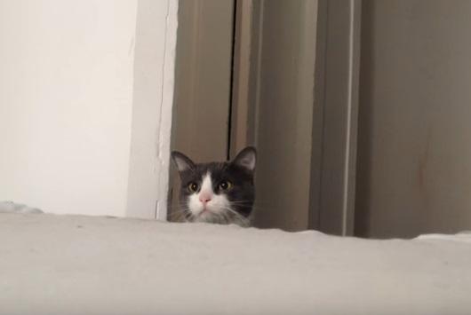 Peek a boo I see you.