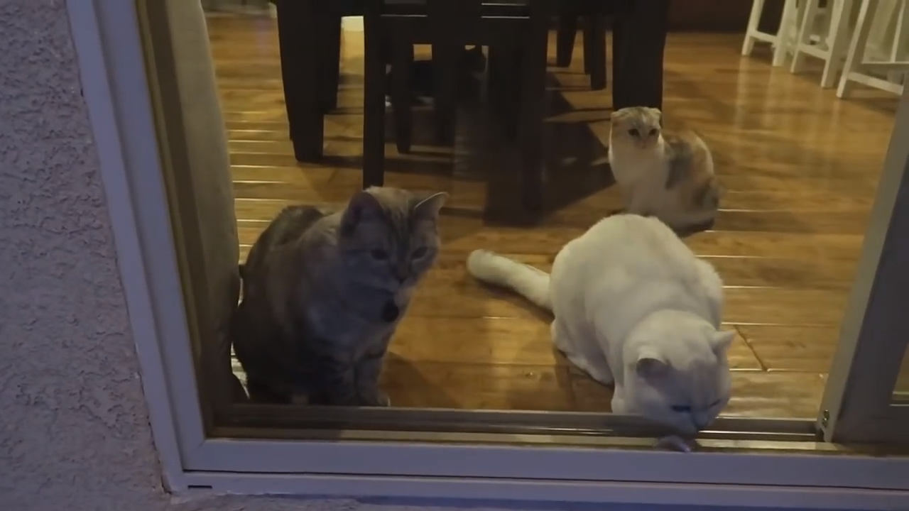 Three cats and a feather
