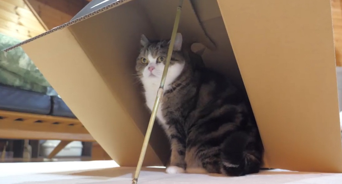 Maru Falls Into The Trap