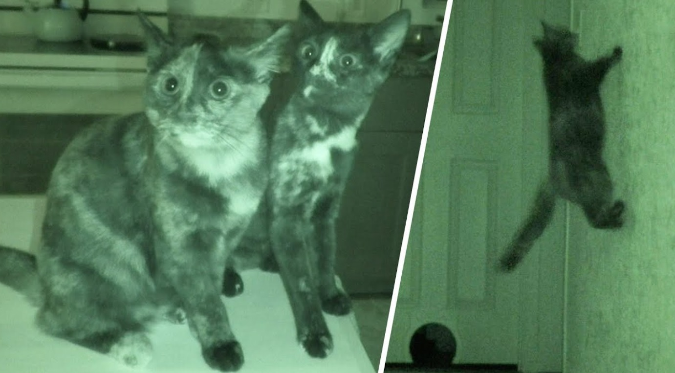 Cats During Night Time