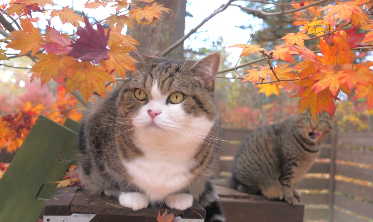 Maru And Hana Enjoy The Autumn