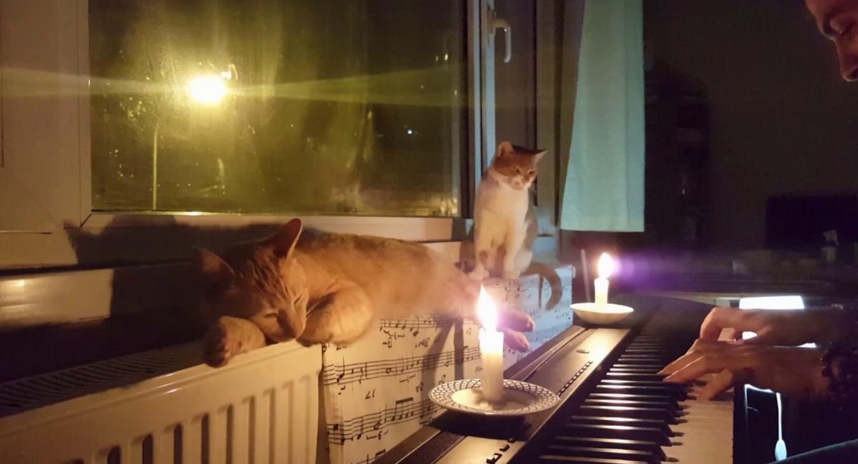 A Peaceful Night
