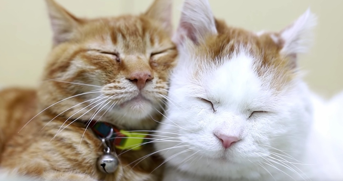 Relaxing Mood With Shiro And Tora