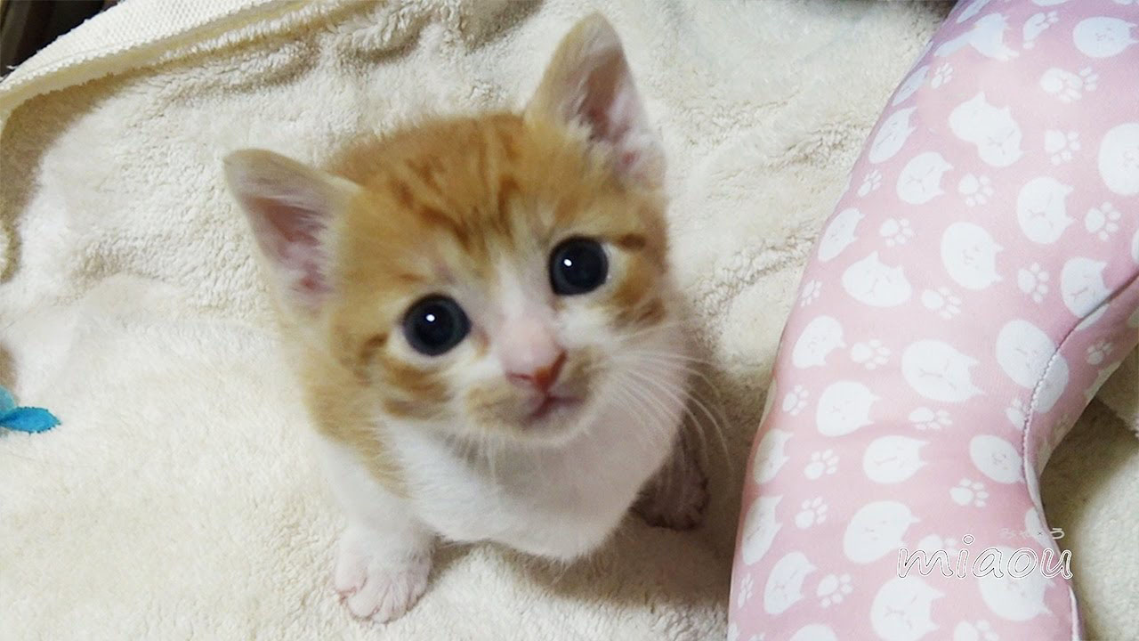 A cute kitten learns his name