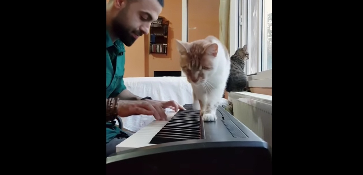 Playing Piano For His Blind Cat