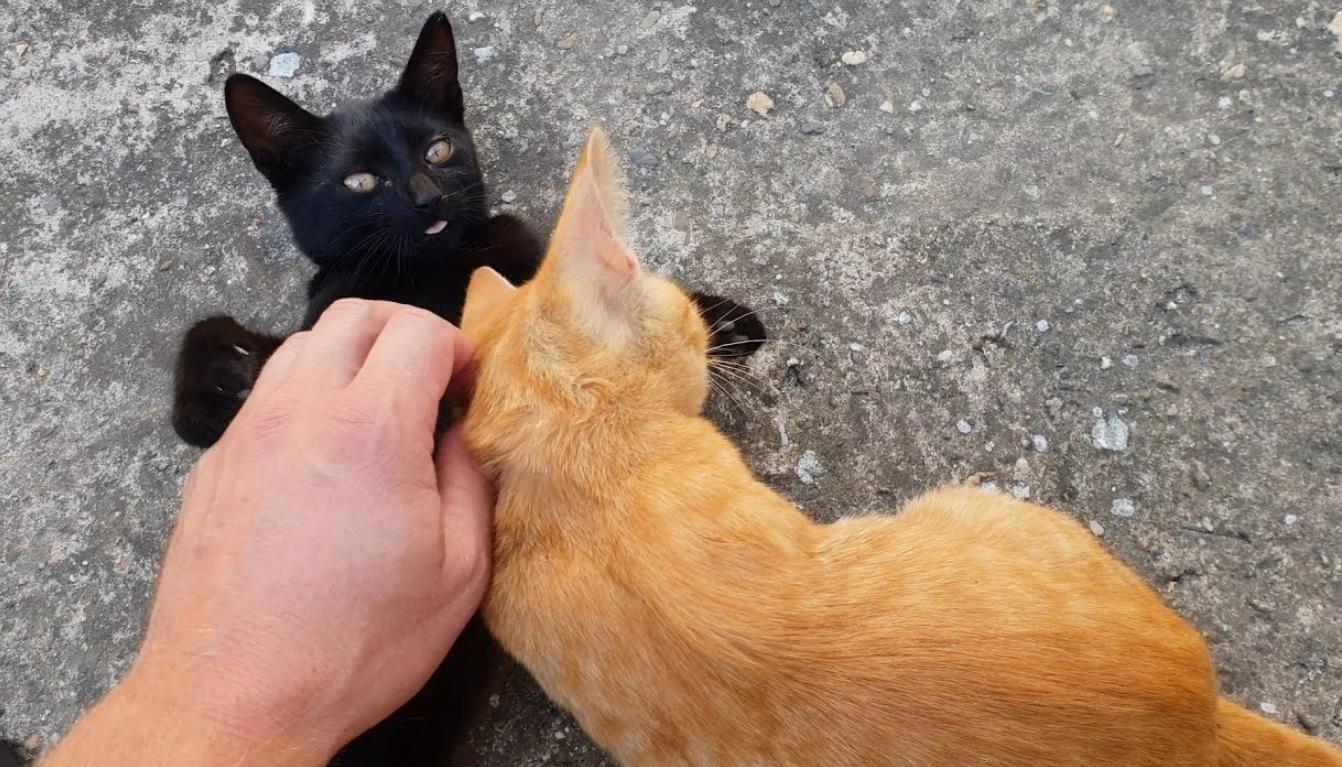 Petting The Kittens