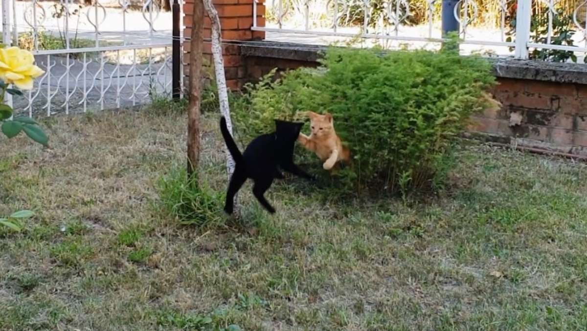 Playful Kittens In The Garden