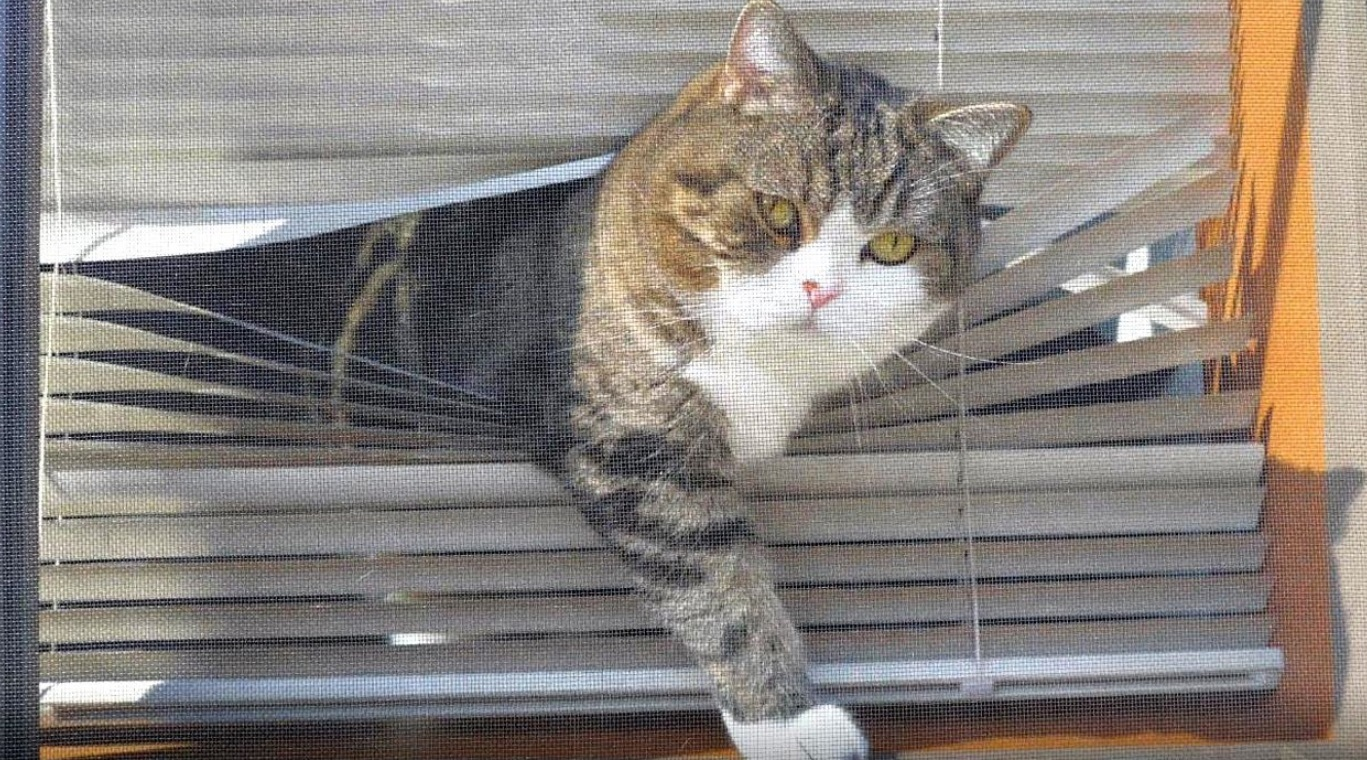 Maru And Hana By The Window