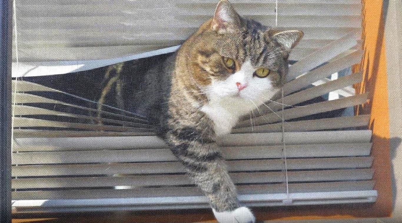Maru And Hana By The Window