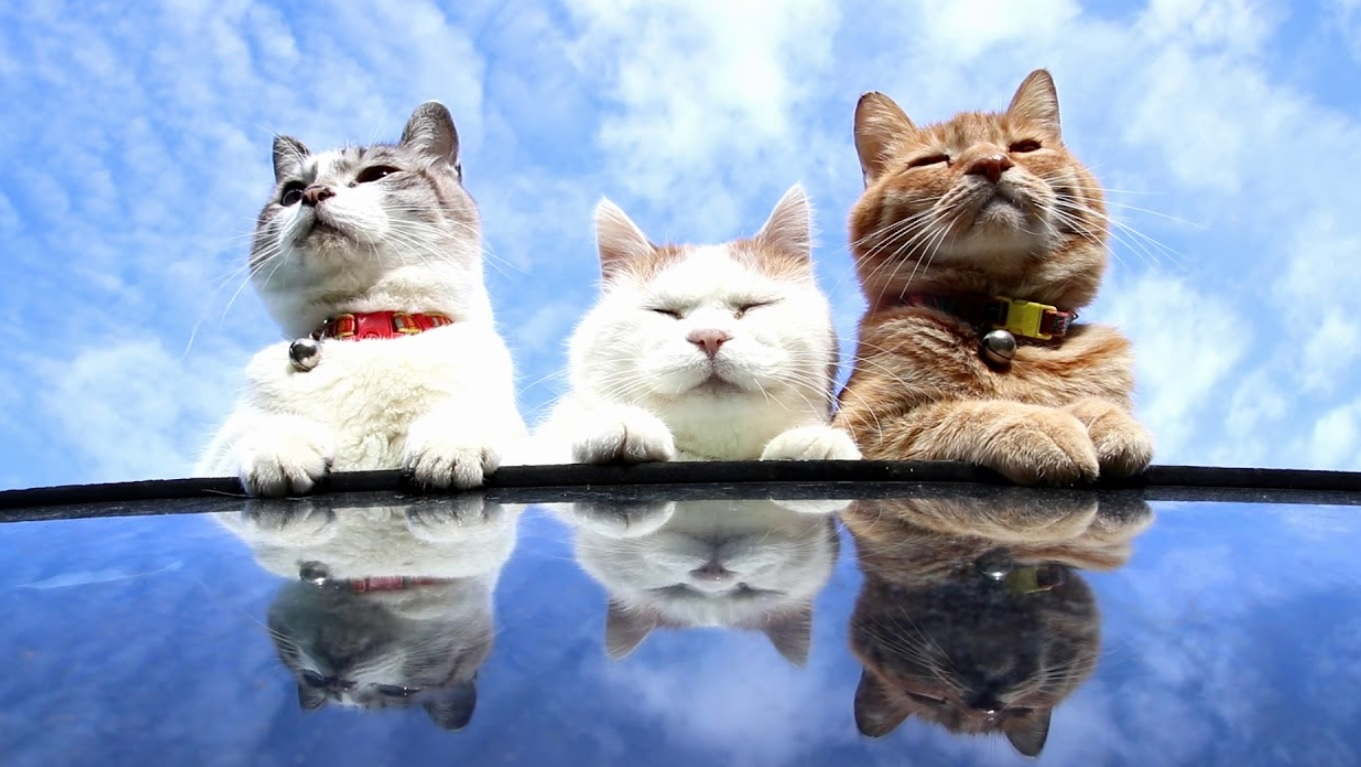 Cats And Wonderful Blue Sky
