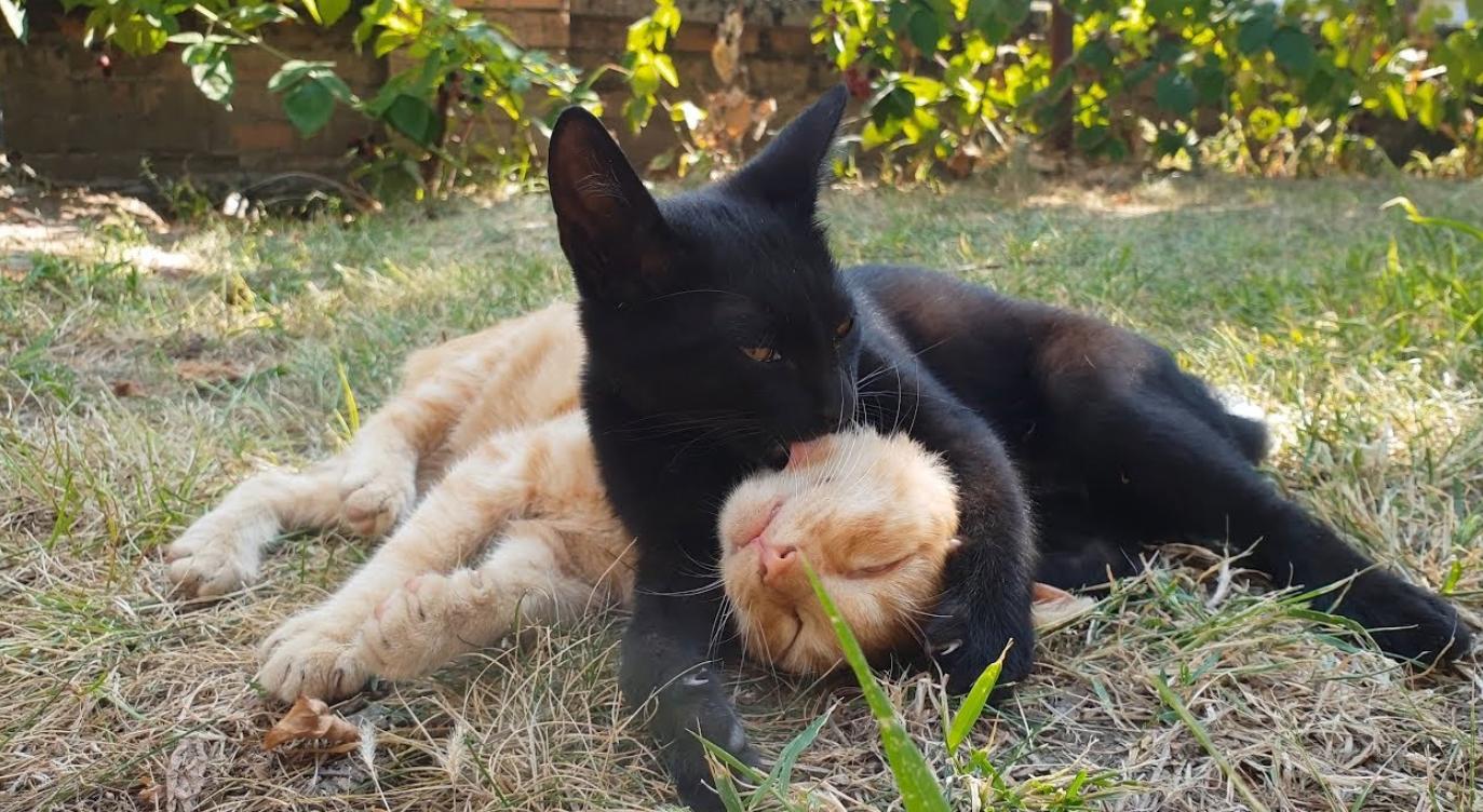 Happy Playful Kittens In The Garden