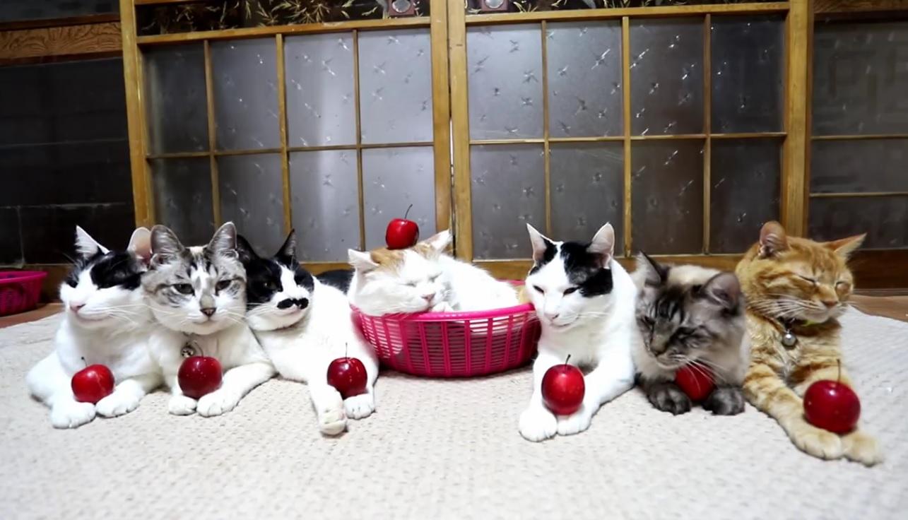 Cute Cats Relaxing