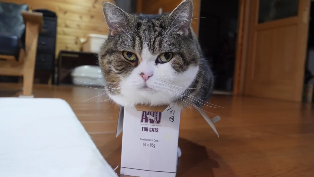 Maru And The Small Box
