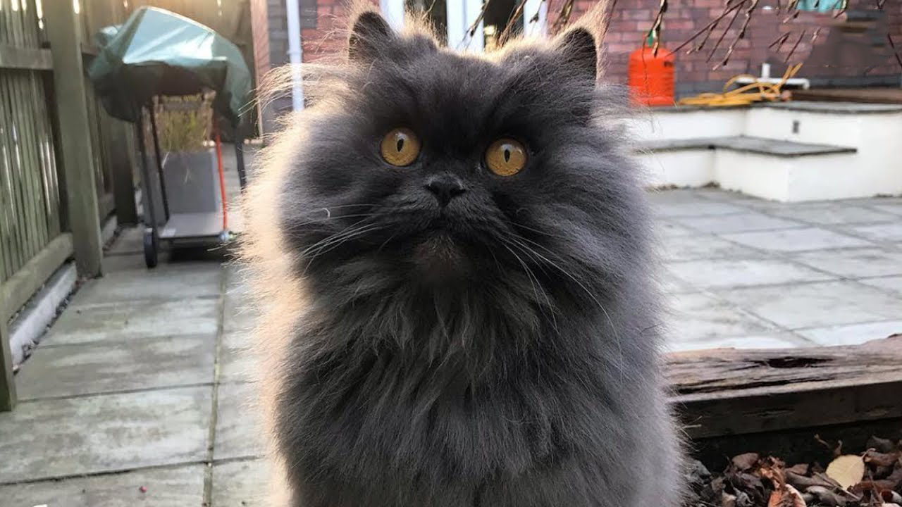 This brave cat travels across the world to her new home