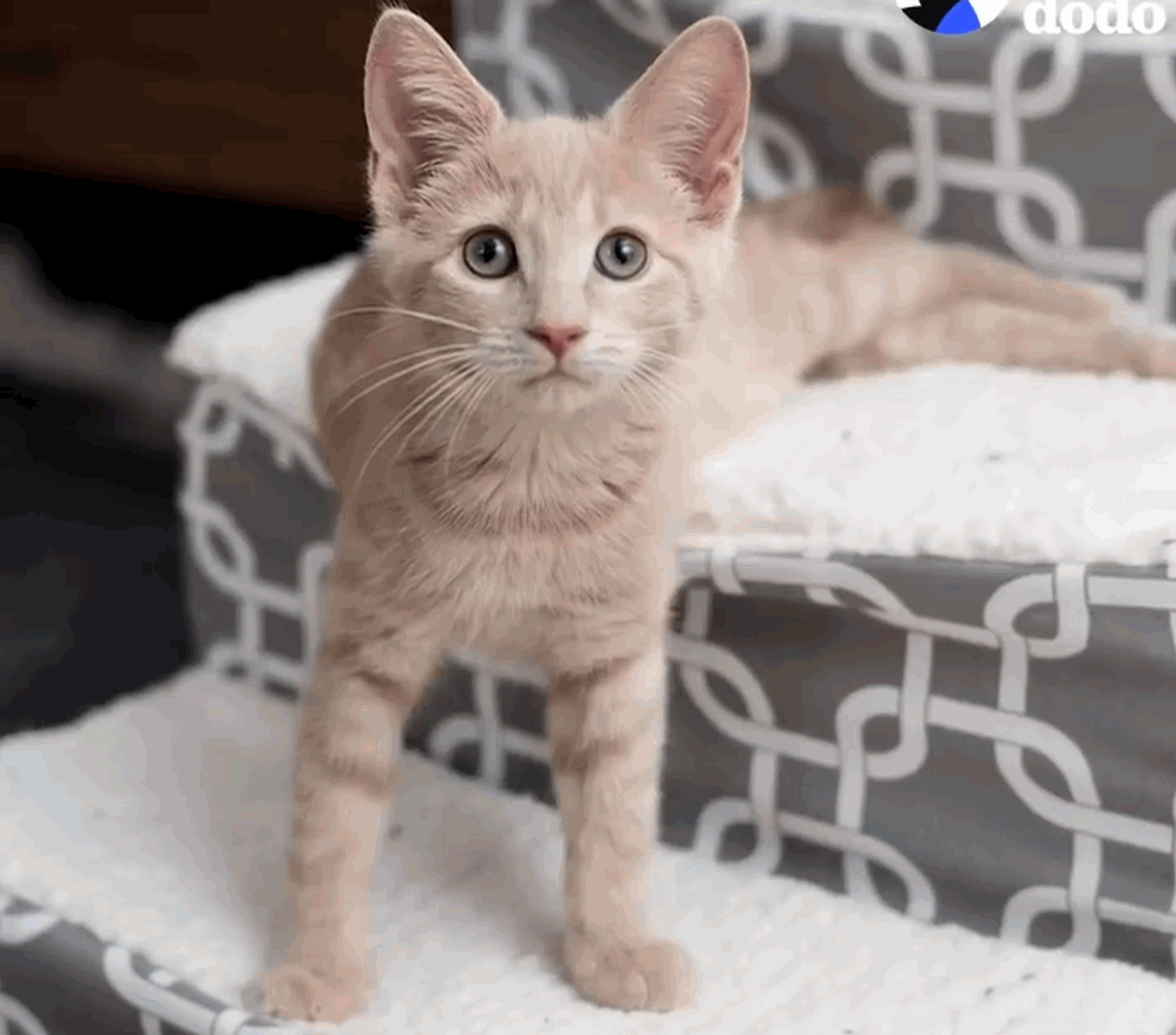The inspiring story of Chloe, the paralyzed kitten