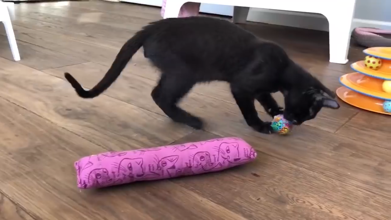 DIY Cat Toys That You Can Make At Home