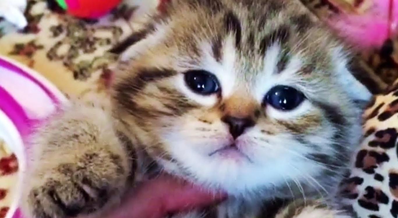 Cute Chubby Foster Kitten