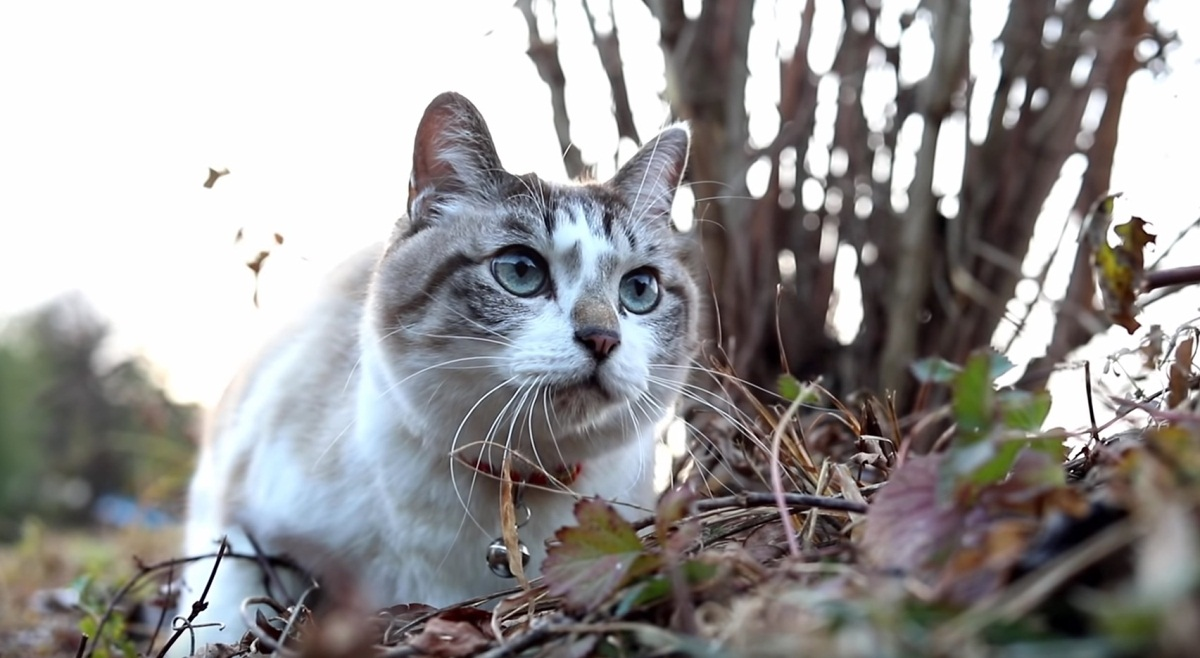 Beautiful Cat Outside