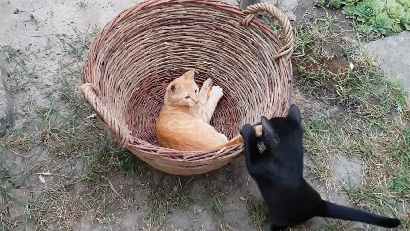 Kittens Playing In The Basket