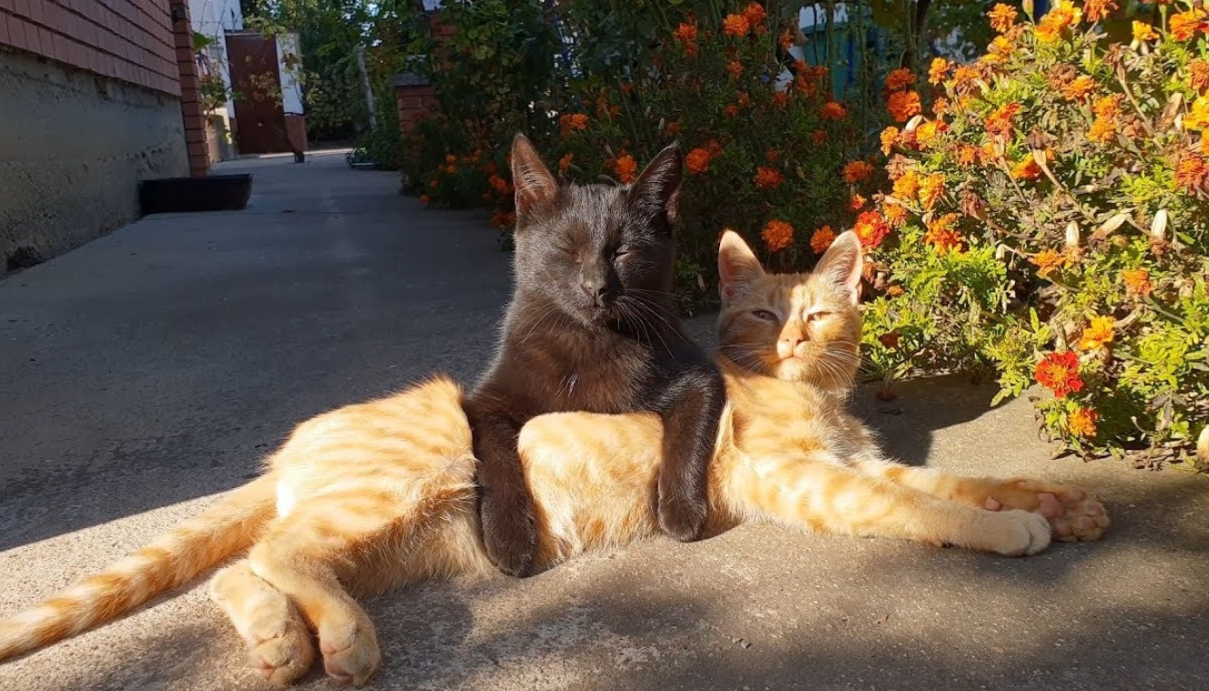 Kittens Enjoy Some Sun