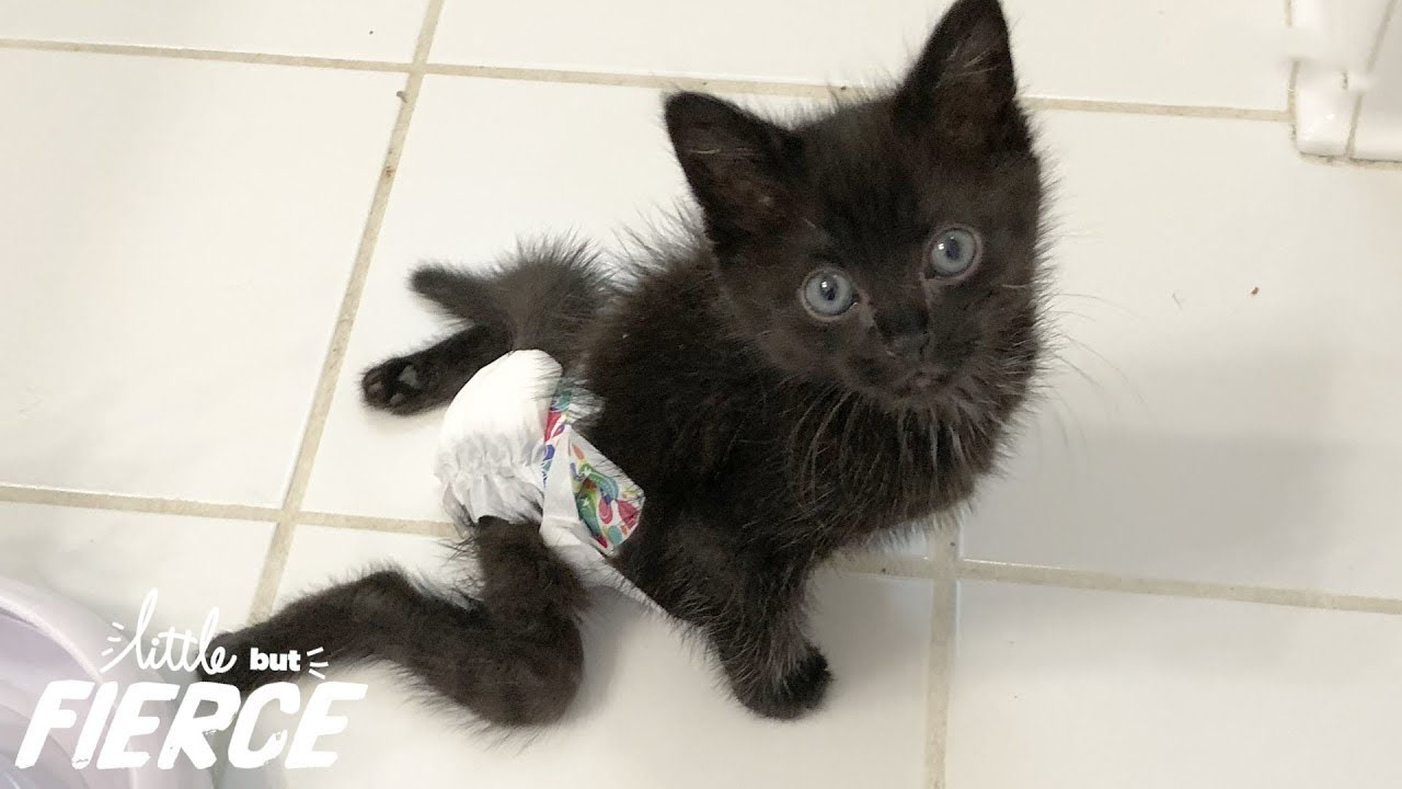 Vets said this paralyzed kitten should be put down...