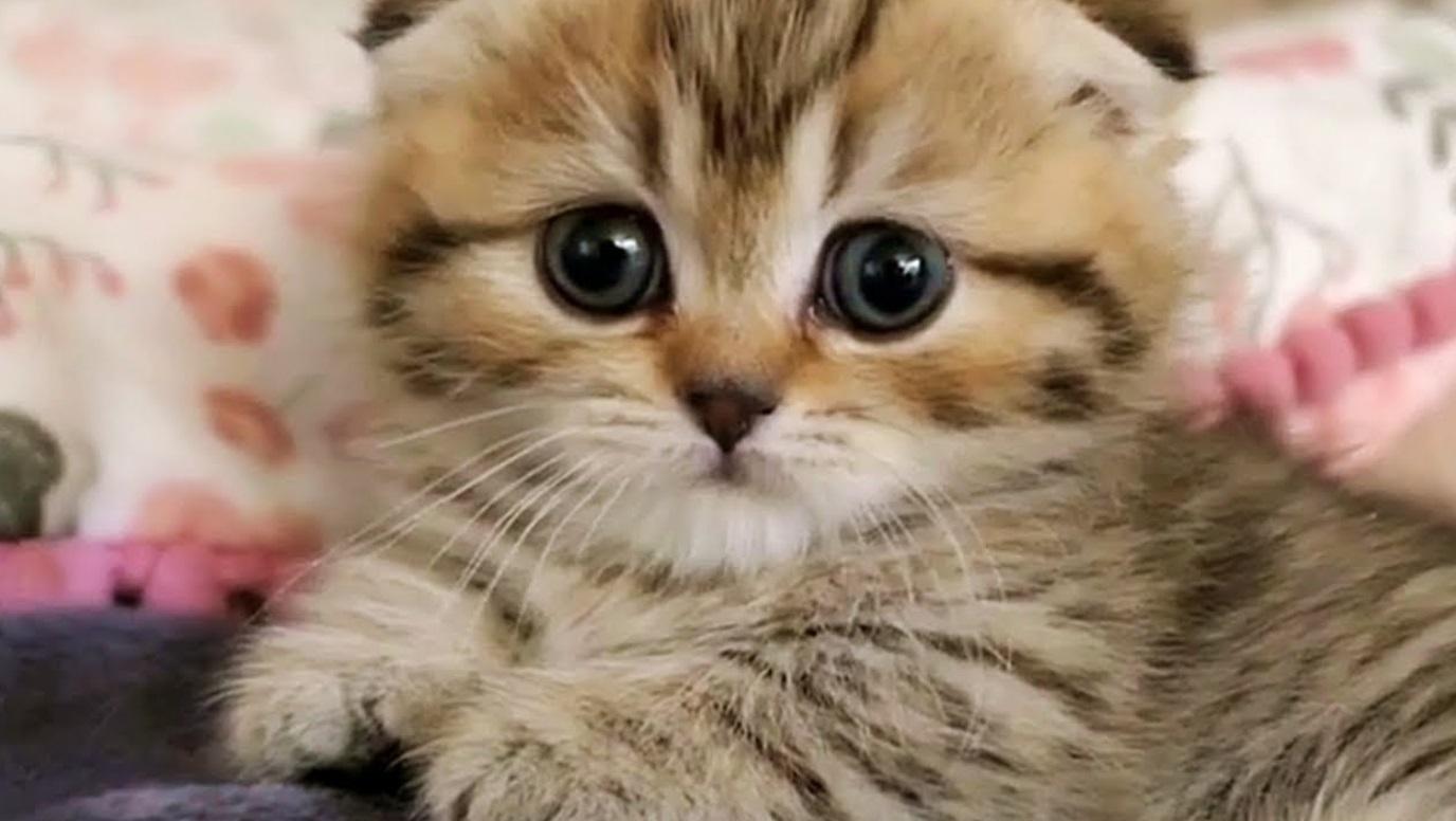 Cuteness Overload Alert