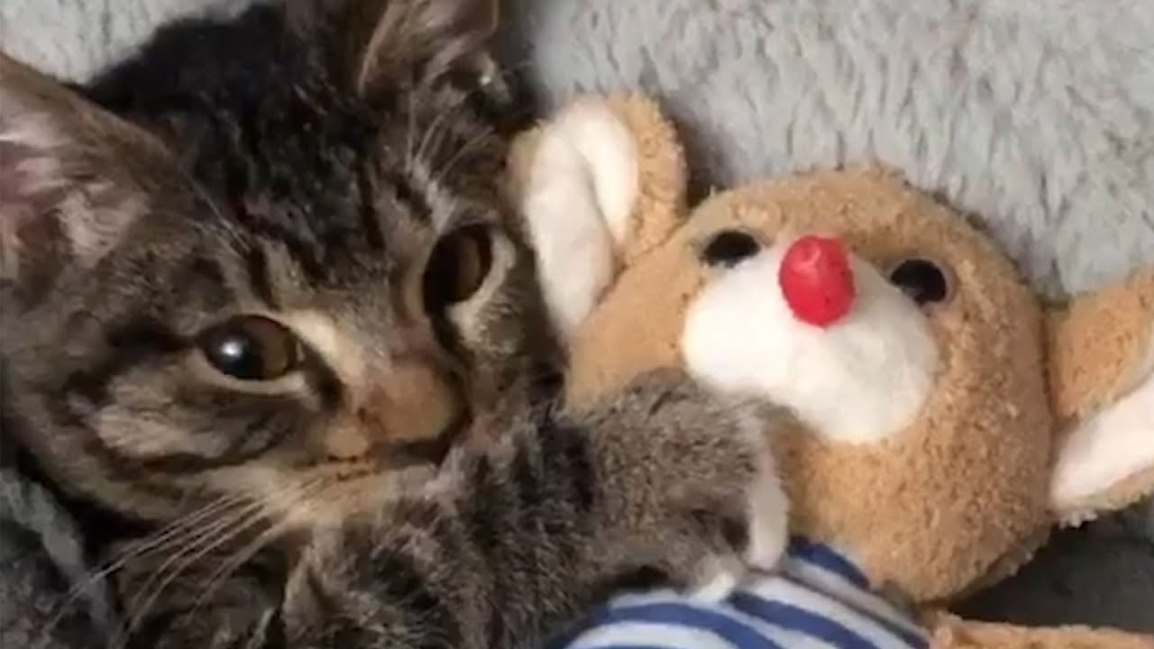 A kitten's bedtime routine