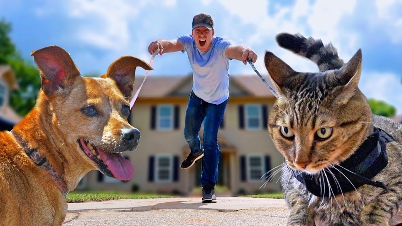 Dog Walking vs Cat Walking