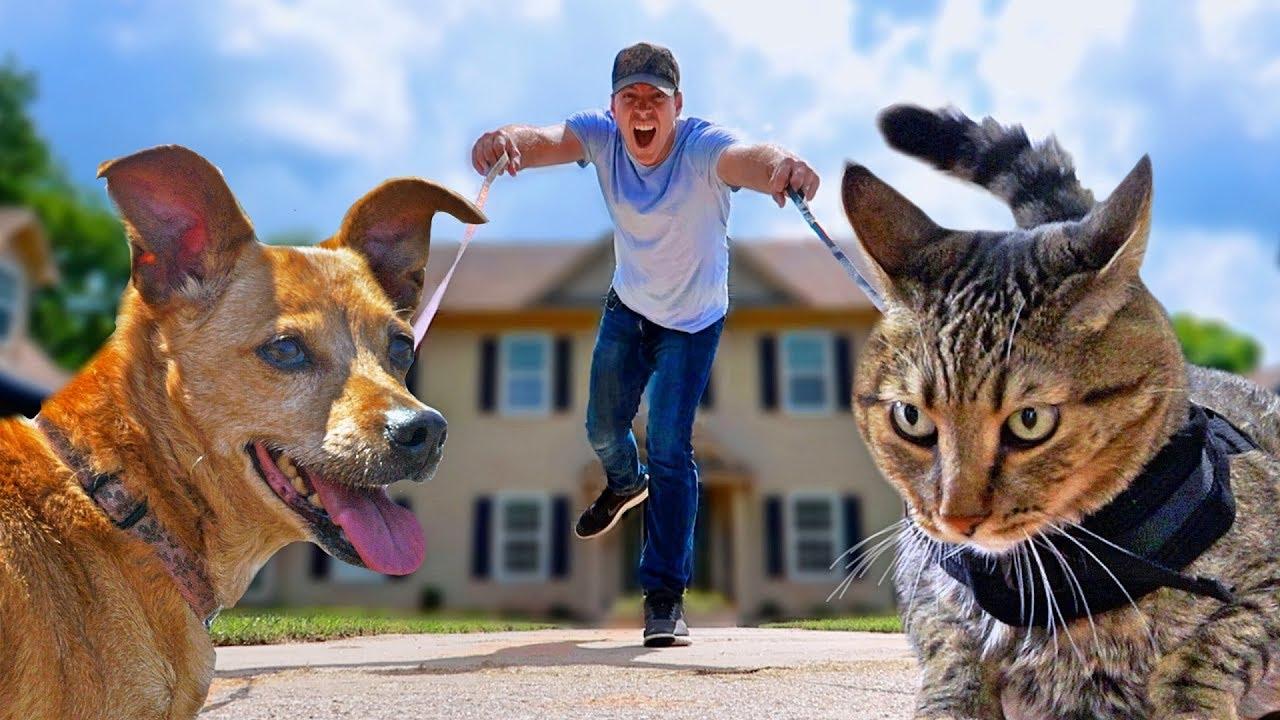 Dog Walking vs Cat Walking