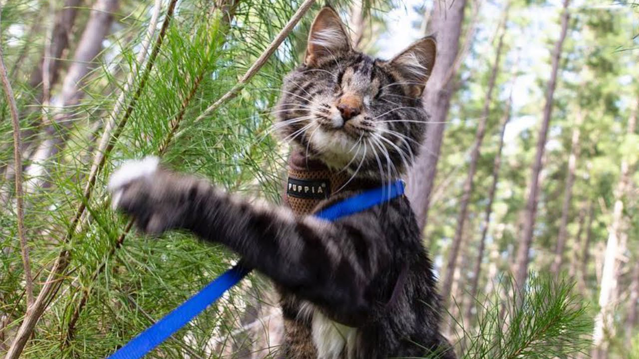 Being blind won't stop this kitty from exploring the world