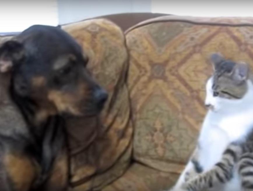Cute Cat Vs Dog Fight