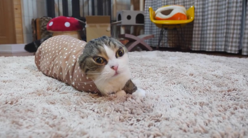 Maru Relaxes In Sleeve