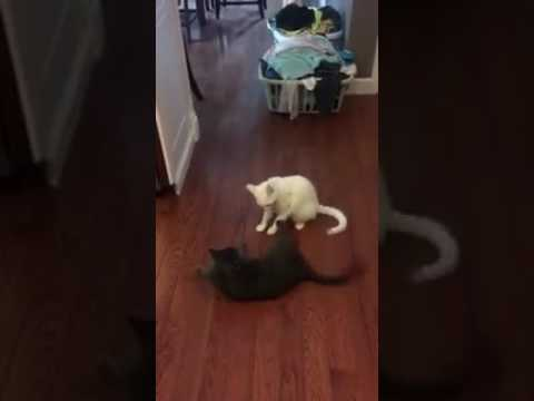 Yin and Yang having a fight