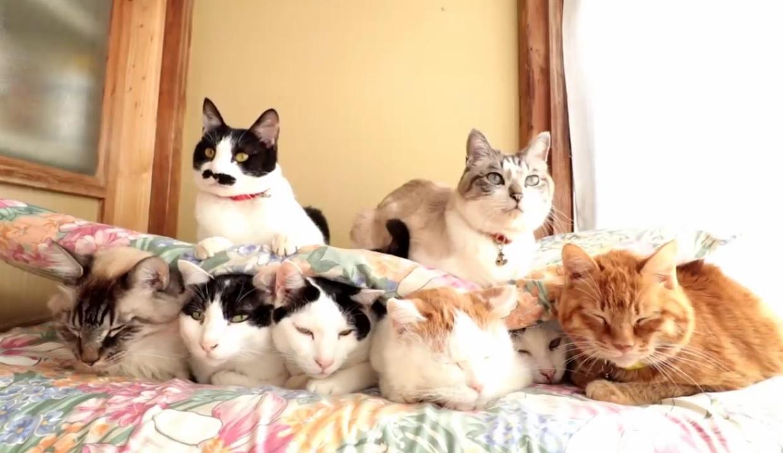 Shiro's Gang Relaxing