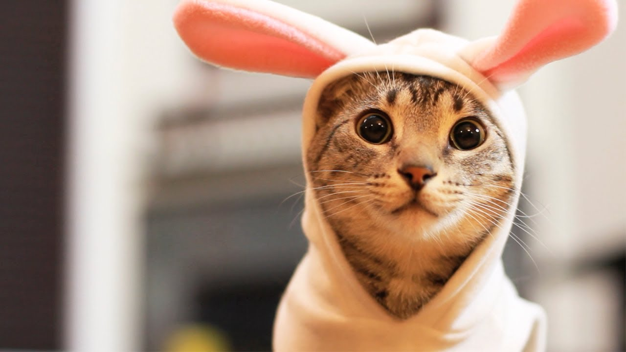 Easter Bunny Kitty