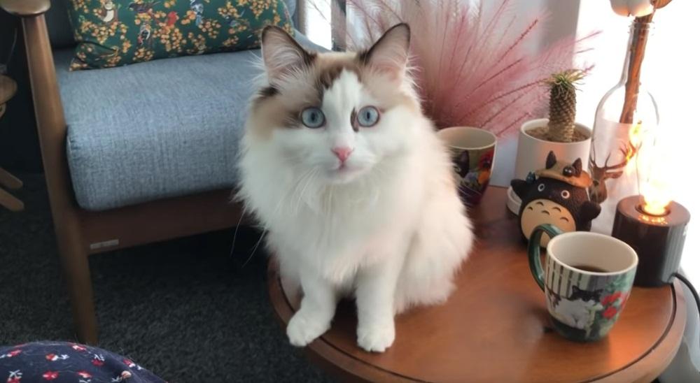 Cute Cat Wants To Go Balcony