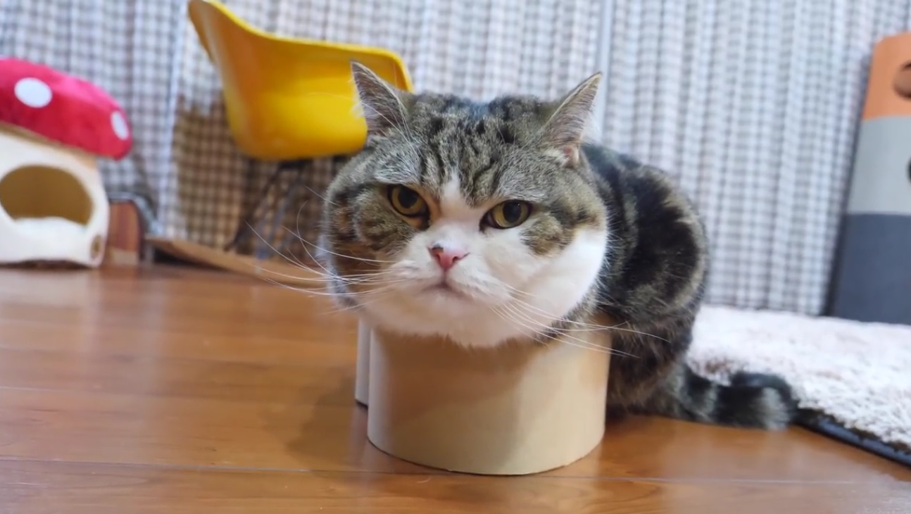 A Heart Shaped Box For Maru