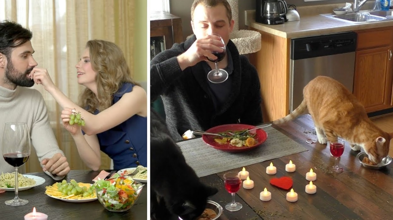 Cat Owners On Valentine's Day